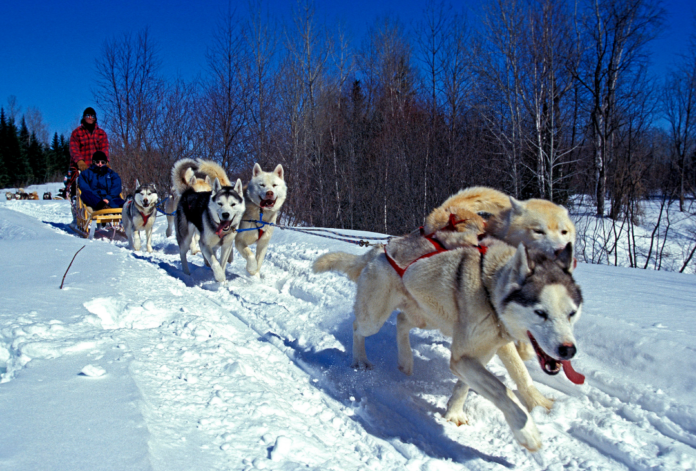 Quebec City dogsledding coupon, promo code