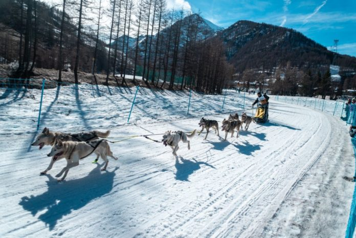 Discount ticket for dog sledding in Sestriere, Italy