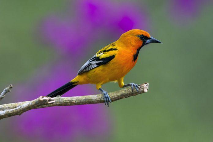 Coupon, promo code for bird watching ecotour of Puerto Vallarta, Mexico