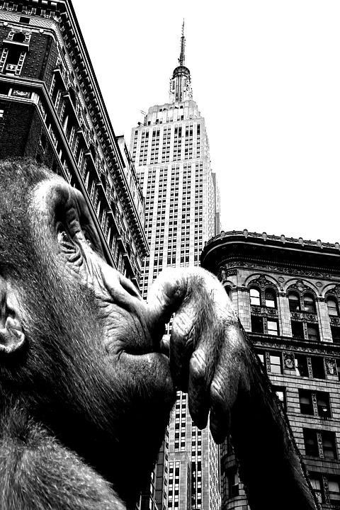 Manhattan sightseeing & classic movie film location bus tour in NYC discount price