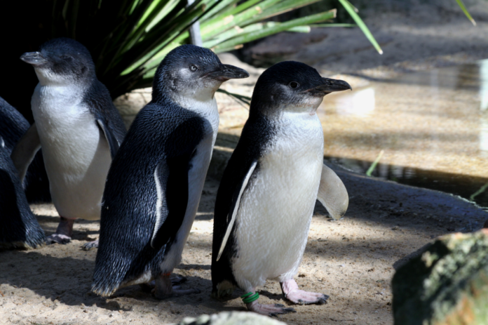 Featherdale Sydney Wildlife Park Zoo discount admission