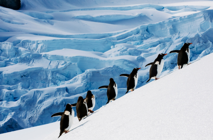 Get 25% off upcoming trips to Antarctica