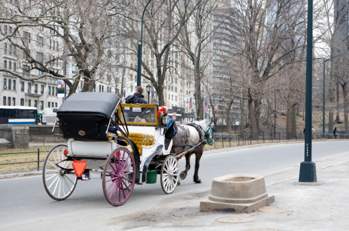 Central Park Valentine's Day Carriage Ride with Red Rose discount price