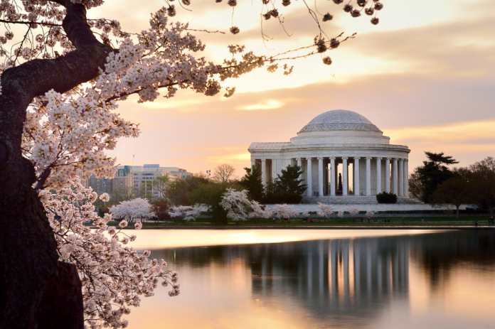 Discount price for Washington DC Japanese Cherry Blossom Tree walking tour
