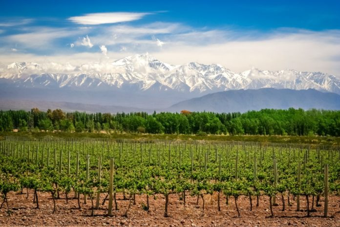Organic vineyards near Mendoza in Argentina with Andes in the background. Learn how to get a free vacation there.