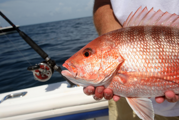 Discounted private fishing tours, romantic sunset cruises & dolphin cruises in Fort Walton Beach, FL