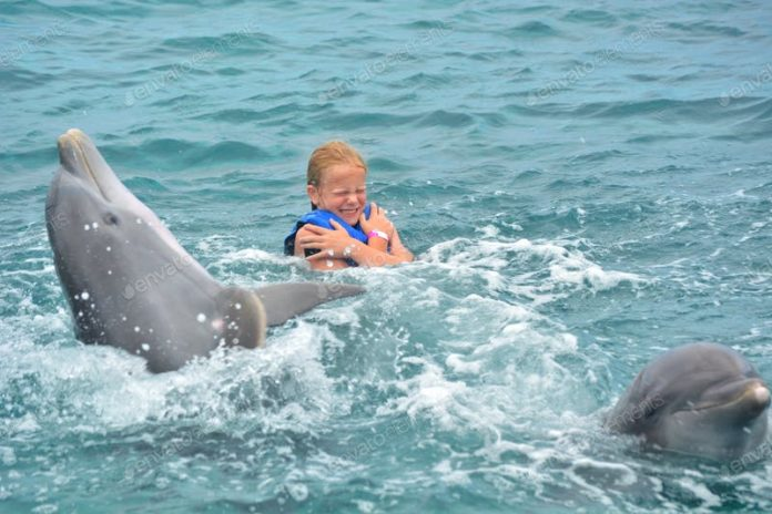 Discount price for Dolphin Discovery dolphin swim adventures in Mexico, Caribbean