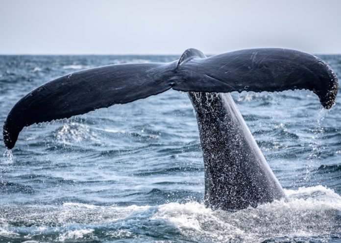 Discount price for whale watching & dolphin watching cruises in Cape May, New Jersey
