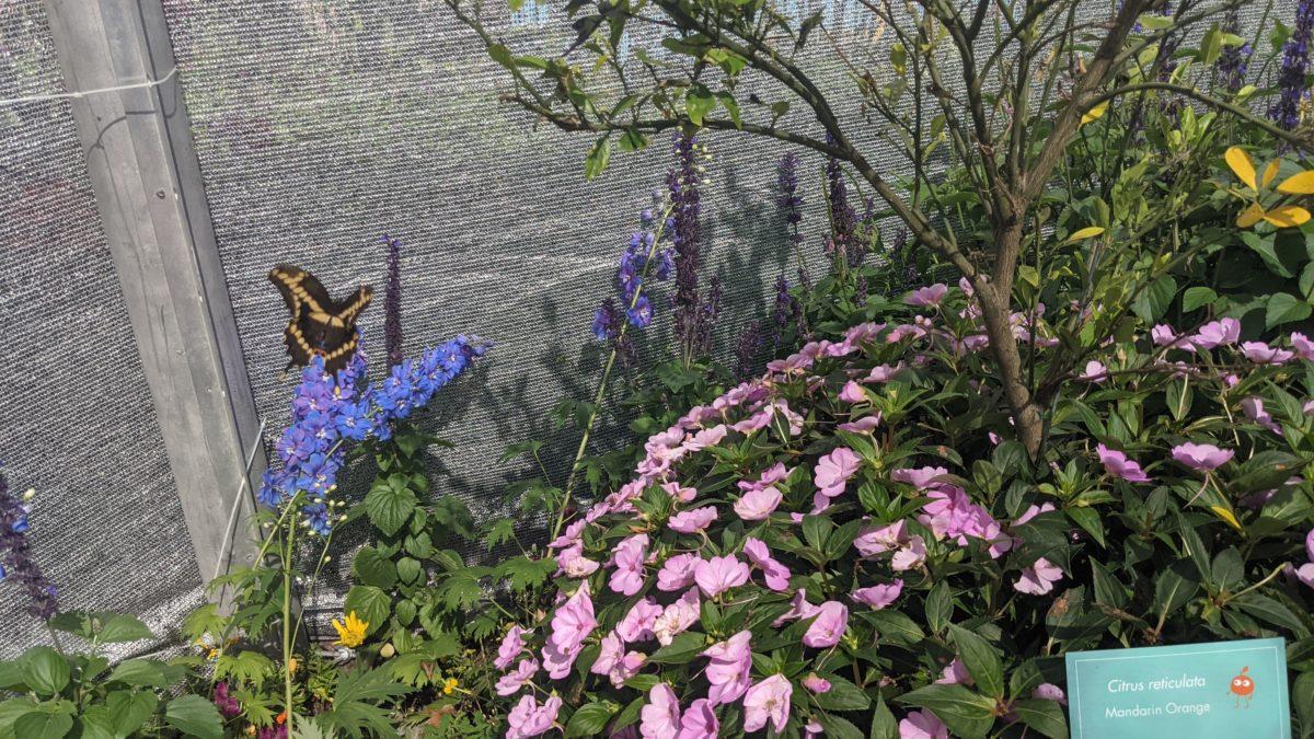 Disney's Epcot's Taste of the Flower & Garden Festival has a butterfly house
