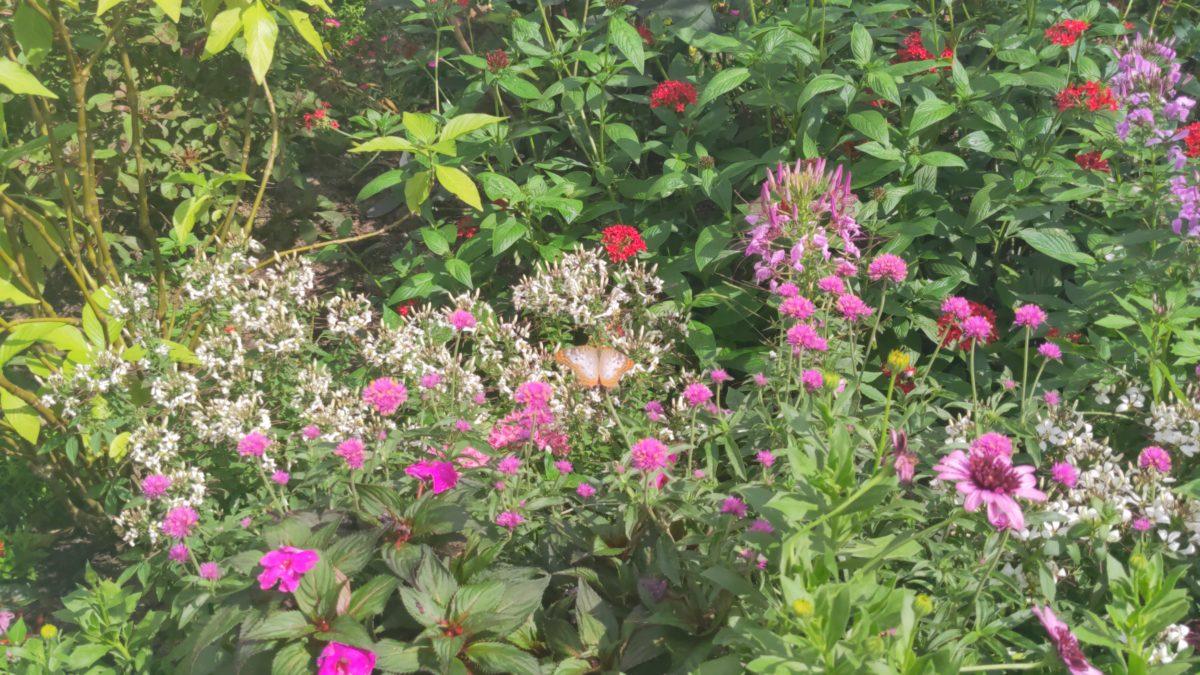 Disney's Flower & Garden Festival has a great butterflies exhibit