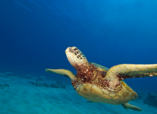 Discount price for For Tours & Snorkeling In Oahu, Hawaii