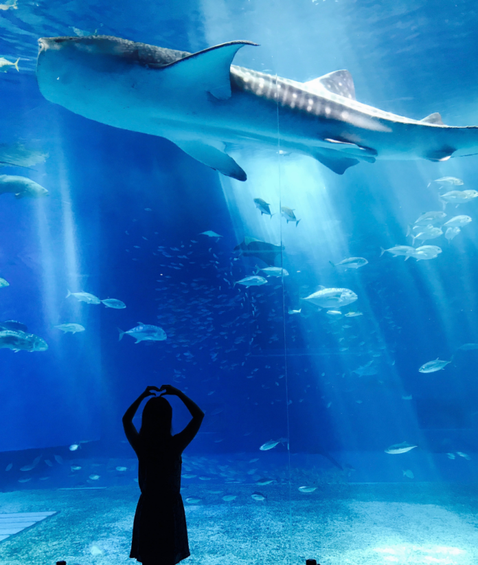 Save money with a discounted ticket to SeaQuest petting zoo aquarium in Lynchburg, Virginia