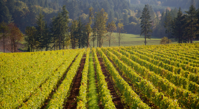 How to win a free trip to Rogue Valley Wine Country or Willamette Valley in Oregon