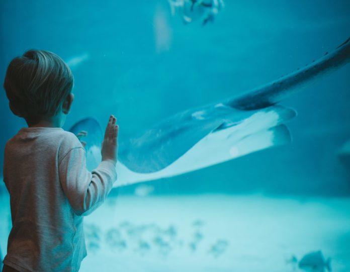 SeaQuest Dallas Fort Worth area aquarium discount tickets, tokens & birthday parties