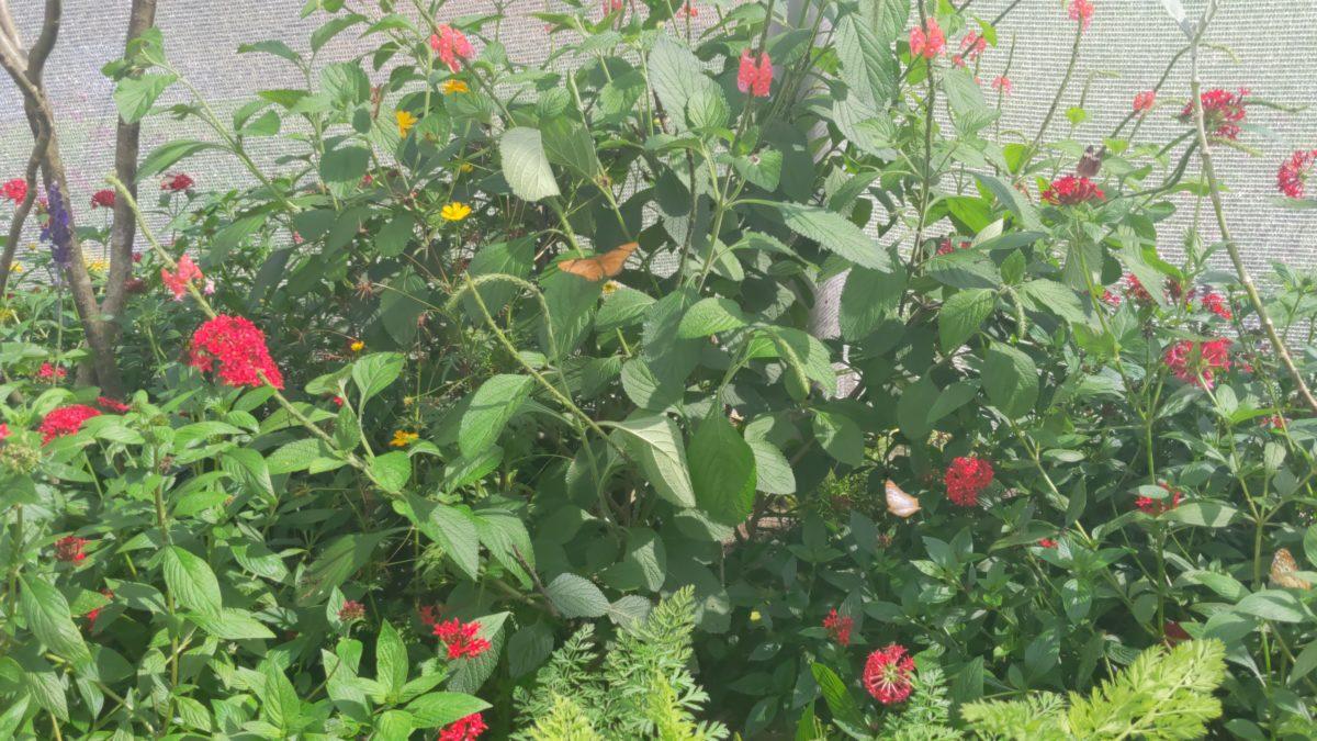See live butterflies in the Butterfly House at Taste of Epcot International Flower & Garden Festival in Disney World