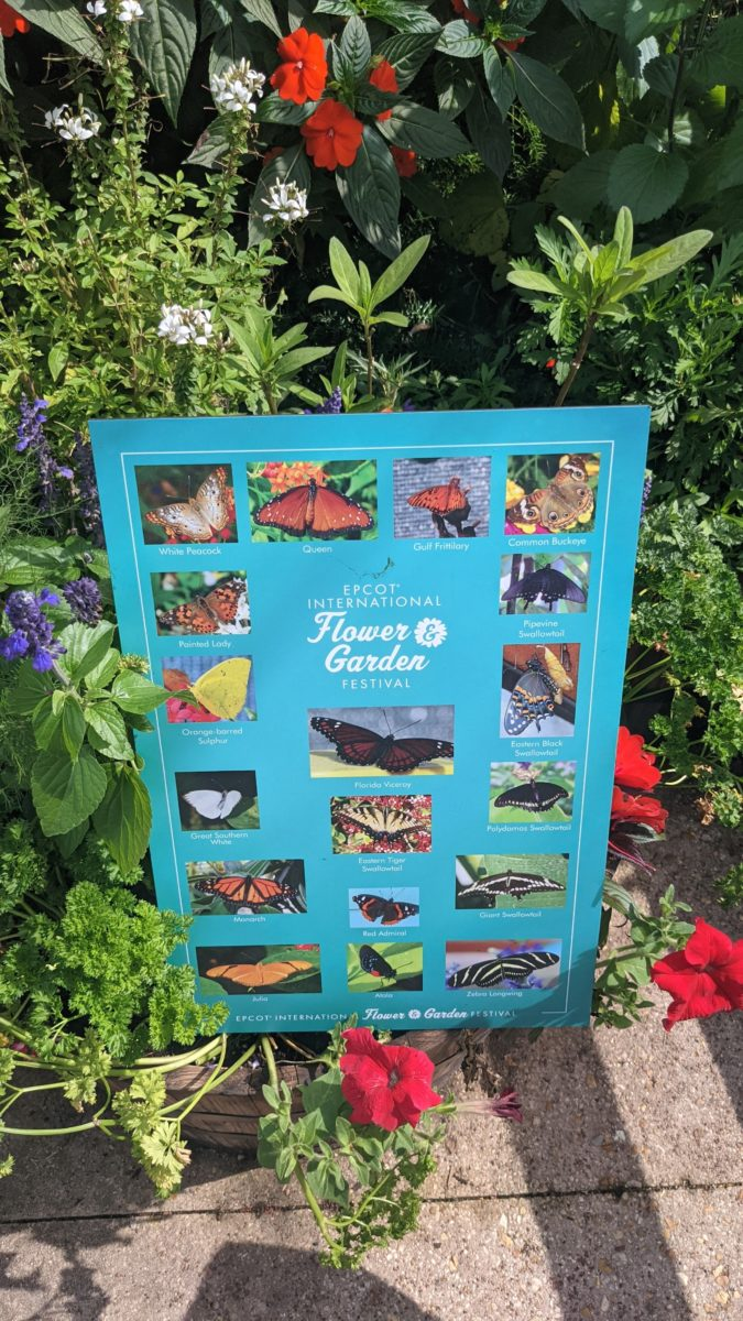 A butterfly chart at an entrance of the butterfly exhibit at Disney's Flower & Garden Festival at Epcot theme park