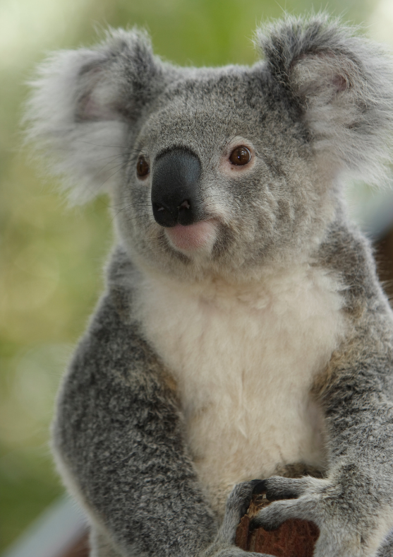 Discounted ticket for WILD LIFE Sydney Zoo Entry Ticket