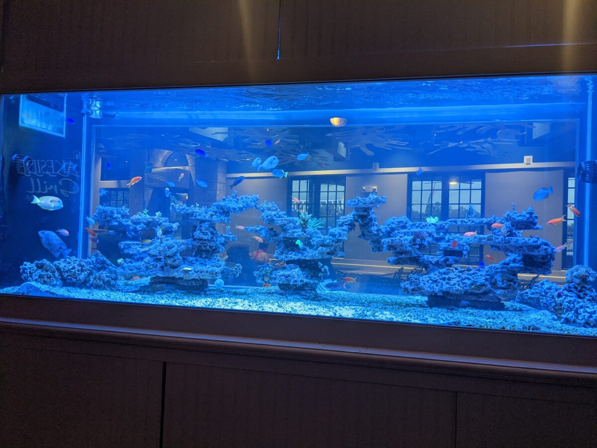 Watch fish while you eat at Lakeside Grill at SeaWorld theme park in Orlando, Florida