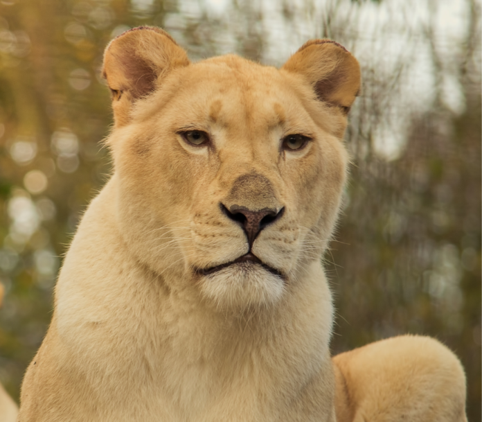 Discount ticket for Zoological Wildlife Foundation in Miami, Florida