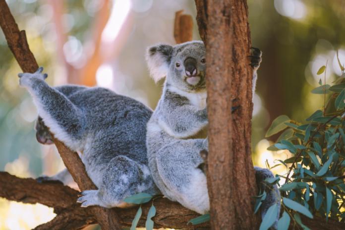 Australia Zoo In Queensland, Home Of Steve Irwin Discount Ticket