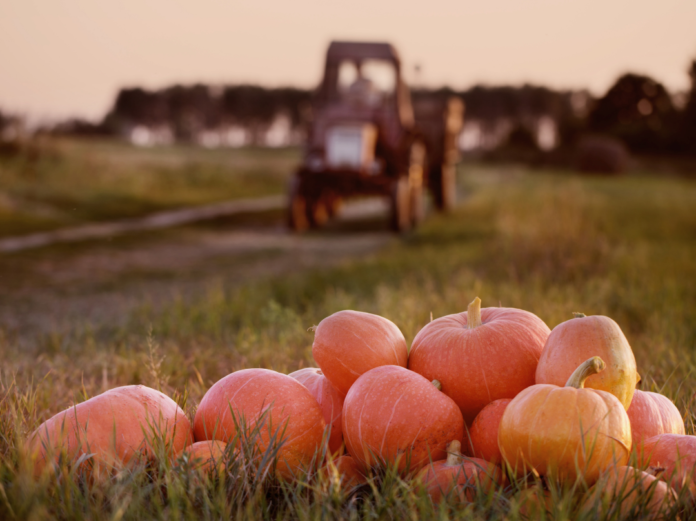 Discount ticket to the Abbey Farms Pumpkin Daze Aurora Coupon in the Chicago, Illinois area