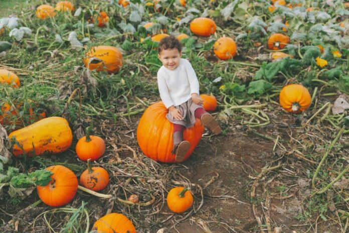 Discount ticket for Cornucopia Farm pumpkin patch, corn maze, etc. in Scottsburg, Indiana