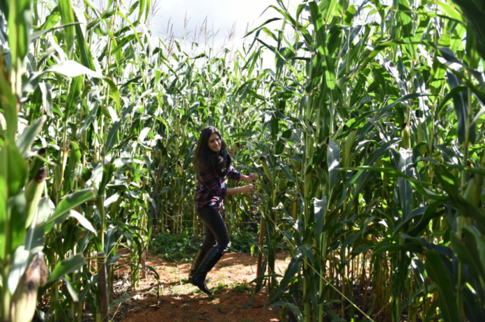 Little Cane Creek Farm & Corn Maze in West Union, SC discount ticket