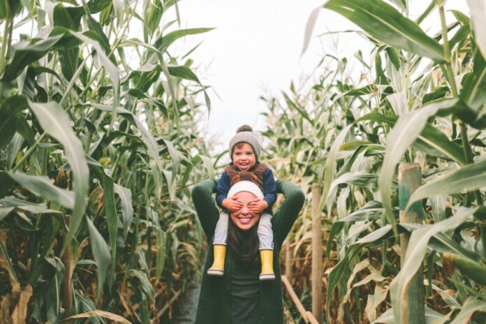 Discount ticket for admission to the Montgomery Orchard Corn Maze in Minnesota