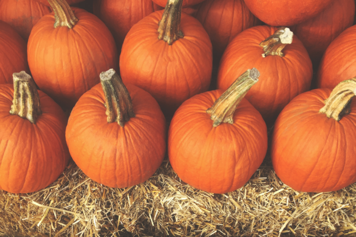 Promo code, coupon for Pumpkin Station fall event in San Diego, CA area