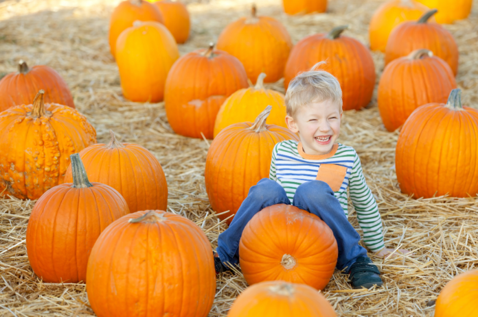 Discount ticket for haunted maze, petting zoo at Toluca Lake Pumpkin Festival in North Hollywood, CA