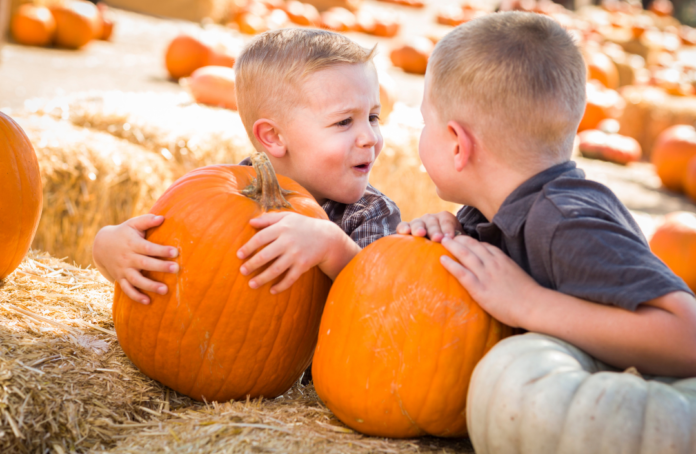 Discount ticket to fall festival with pumpkin patch at Valley Pasture Farm in Wisconsin