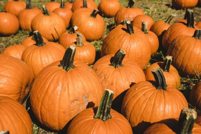 Promo code, coupon for Chester's Pumpkin Patch in Piedmont, Oklahoma