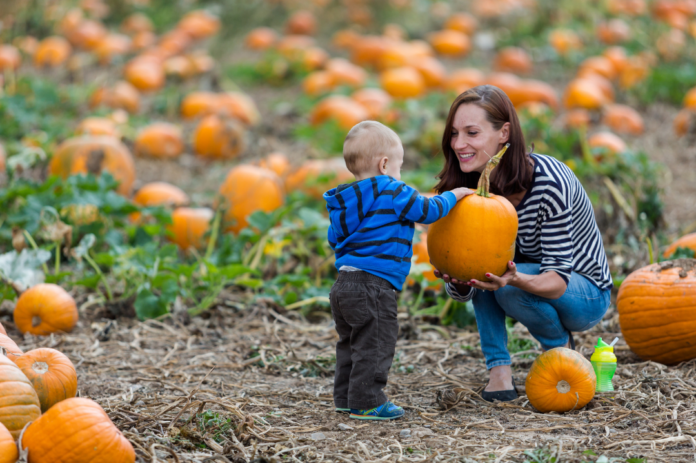 Discount ticket for Maize Quest fall activities (corn maze, wagon rides, pumpkin patch, apple picking, train ride, etc.) near York, PA & Baltimore, MD