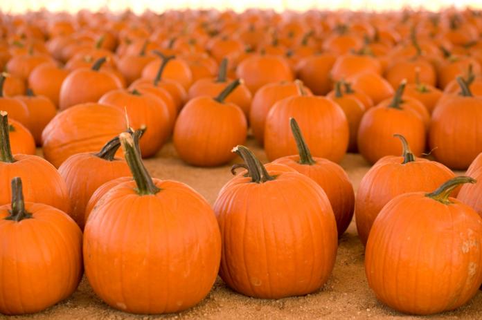 Mr. Jack O' Lanterns Pumpkins LA Discount Ticket