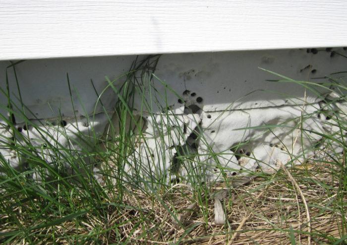 If Ants Like Rigid Foam, Should We Stop Using It? - GreenBuildingAdvisor