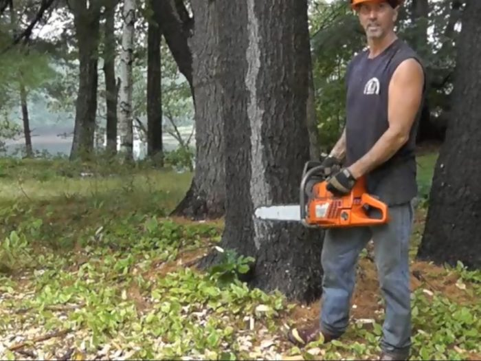 Cutting Down Trees and Milling Lumber - GreenBuildingAdvisor