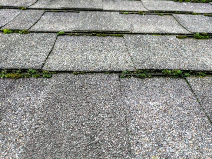 Moss And Algae On Roof Greenbuildingadvisor