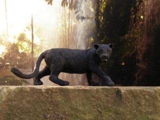 1:12th scale Panther
