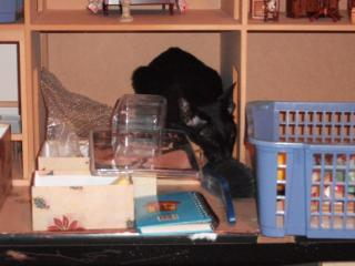 dollhouse And cats 006