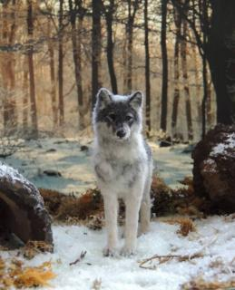 Lupercus - Gray Wolf 1:12th scale
