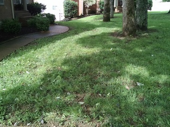 Lawn Mowing Service nearby Goodlettsville, TN, 37072