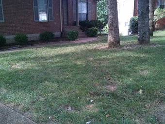 Lawn Mow nearby Goodlettsville, TN, 37072