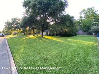 Lawn Servicein Rosenberg,77471,Lawn Maintenance by Tex Ag Management, work completed in Jul , 2020