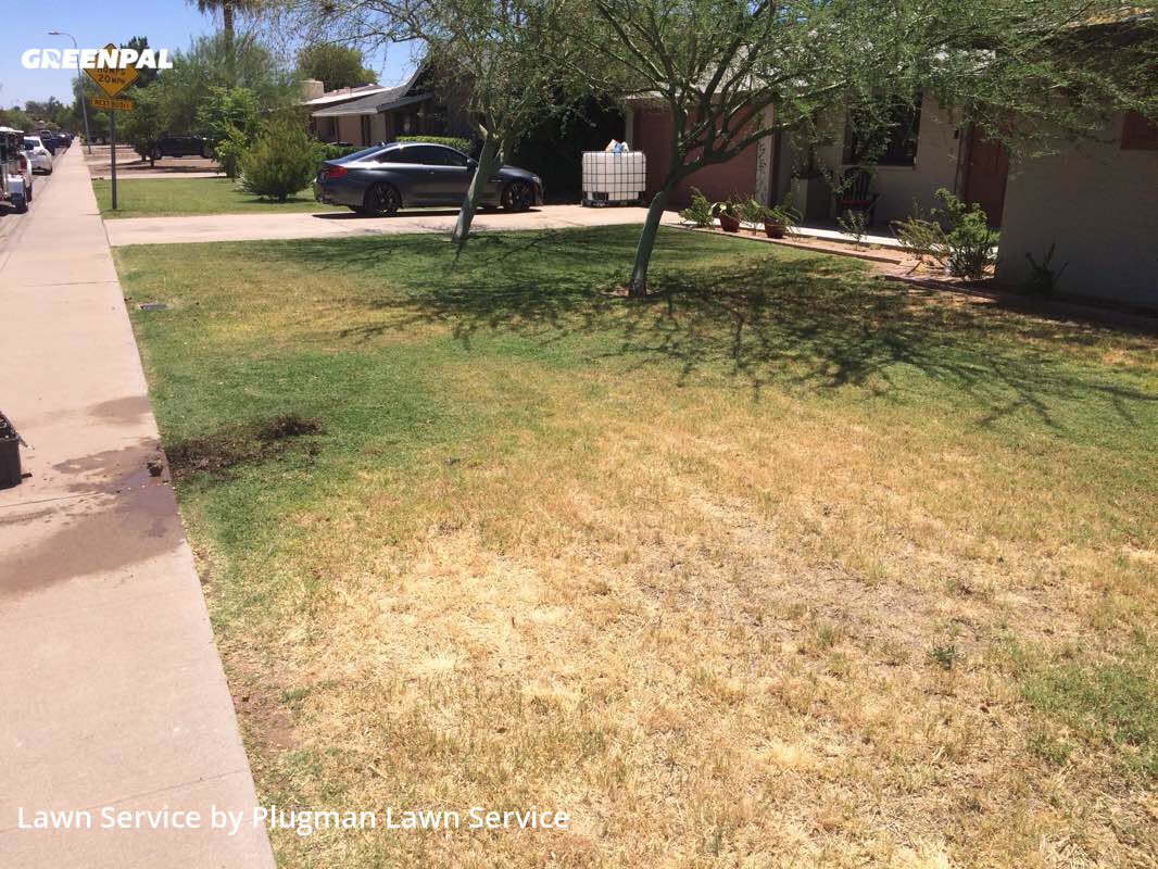 Lawn Mowing Servicein Tempe,85281,Grass Cut by Plugman Lawn Service, work completed in Aug , 2020