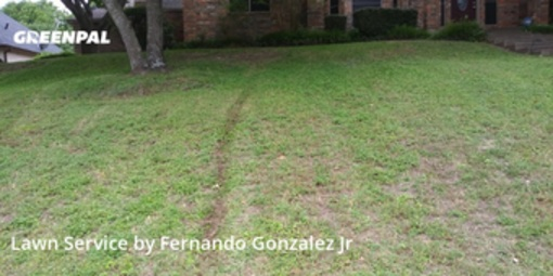 Lawn Cutin De Soto,75115,Lawn Care Service by Bent Twig, work completed in Jul , 2020