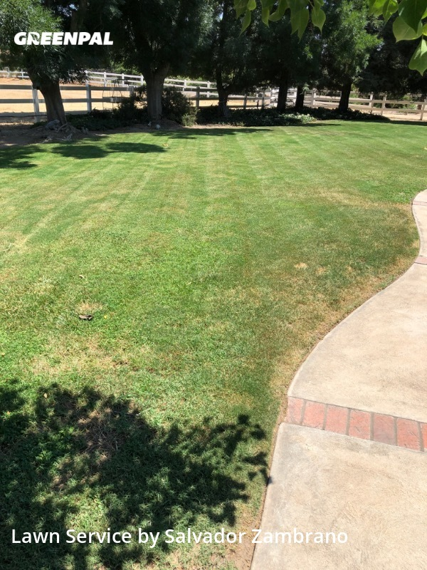 Lawn Care Servicein Madera,93636,Lawn Mowing by Zambrano's Lawn Care, work completed in Jul , 2020