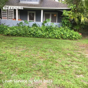 Yard Cuttingin Winter Park,32789,Lawn Mowing by Mila Boza, work completed in Jul , 2020