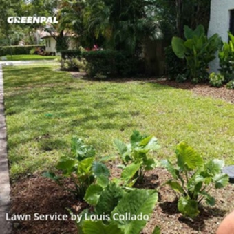 Yard Mowingin Coral Gables,33134,Lawn Cutting by Dreamscapes, work completed in Jul , 2020