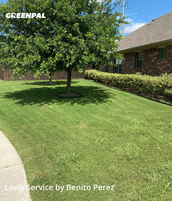 Grass Cutin Hutto,78634,Lawn Cut by Benzki Lawn Care, work completed in Sep , 2020