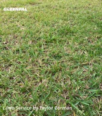 Lawn Servicein Winter Park,32789,Lawn Maintenance by Sea Palm Services, work completed in Jul , 2020